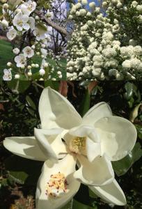 Matrix of Spring Blooms